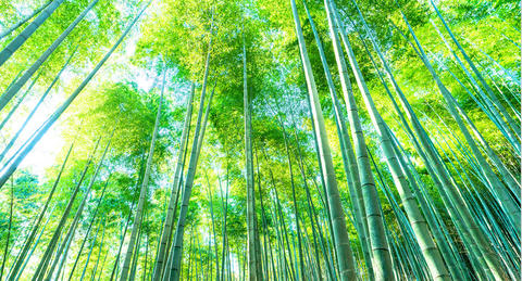 """ワタミが""""竹ストロー""""の提供開始、<br>「海洋汚染」と「放置竹林」問題解決目指す"""